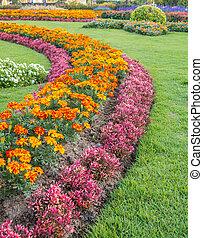 jardin, parterres fleurs, enroulement, séduisant, thaïlande, herbe, coloré, chemin, formel