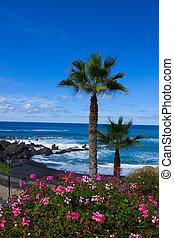 jardin, playa, スペイン, tenerife