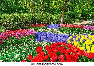 jardin, printemps, tulipe, modèle fond, ou, rouges
