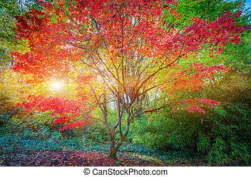 jardin, seattle, arbre, érable japonais