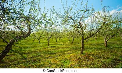 jardin, timelapse, pomme