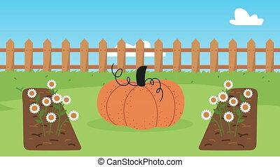 jardinage, citrouille, animation, barrière