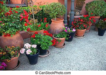 jardinage, concept, beaucoup, -, fleurs, décoration, rue, fleurs, pots fleurs