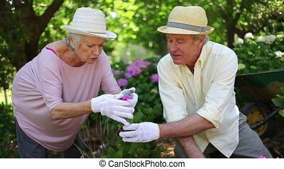 jardinage, couples mûrs, ensemble