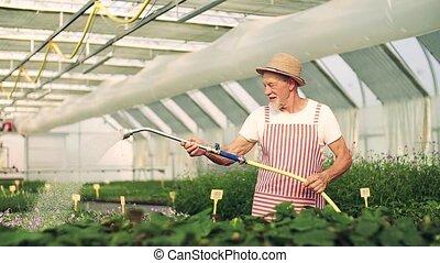 jardinage, plants., vue, serre, homme, devant, personne...