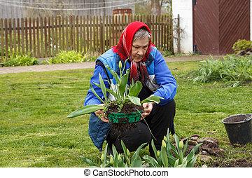 jardinage, vieille dame