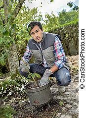 jardineiro, tendendo, para, um, planta