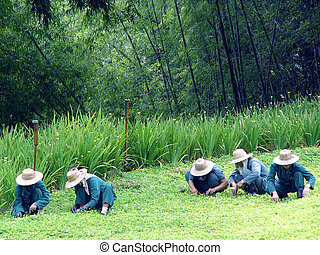 jardineiros, tailandês