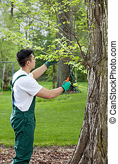 jardinero, cropping, árbol