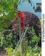 jardinero, en el trabajo