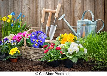 jardinero, plantación, flores