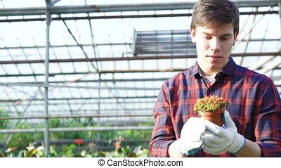 jardinier, examiner, 4k, gardenhouse, plant