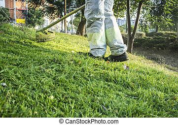 professionnel fauchage pelouse t pelouse sien images rechercher photographies et. Black Bedroom Furniture Sets. Home Design Ideas