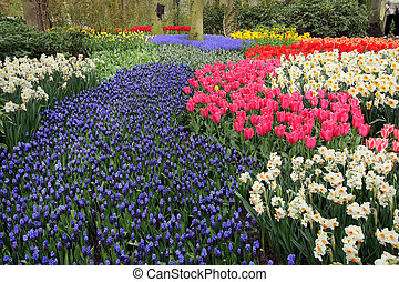 jardins flor, cama, keukenhof