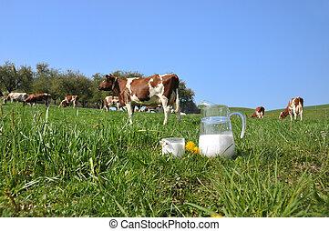 jarra leche, contra, manada, de, cows., emmental, región,...