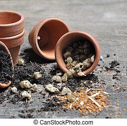 jarro, sementes, derramado