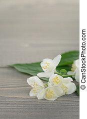 jasmijn, bloemen, op, oud, hout, tafel