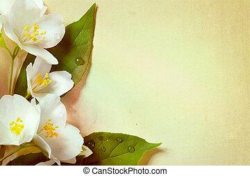 jasmijn, lentebloemen, op, oud, papier, achtergrond