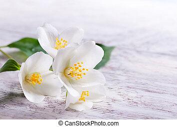 jasmijn, witte bloem, op wit, hout, achtergrond
