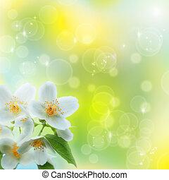 jasmin, bloem, als, abstract, natuurlijke , achtergronden