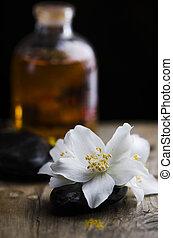 Jasmin flower and scented oil - Spa concept. Jasmin flower...