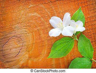 Jasmin on wooden background