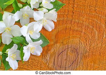 jasmin, vår blommar, ram, vita, bakgrund