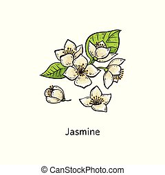 Jasmine drawing set - hand drawn white flower with green leaves