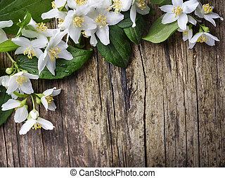 Jasmine flower - Beautiful jasmine flower on rustic wooden ...