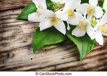 Jasmine flower on grunge wooden plank
