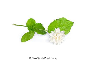 jasmine flower with leaf isolated on white background