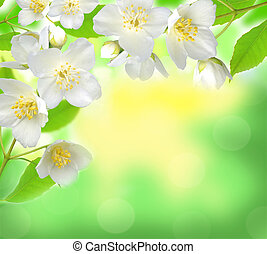 Jasmine flower with leaves over beautiful nature background