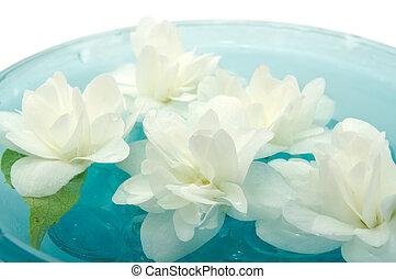 Jasmine Flowers Floating on Water