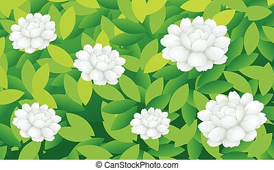 Jasmine flowers in the bush