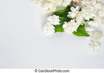 Jasmine flowers isolated on white background