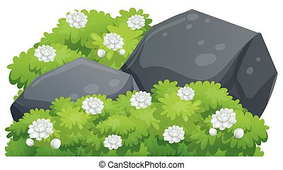 Jasmine flowers on green bush