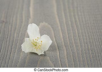 jasmine flowers on old wood table