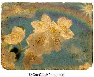 Jasmine flowers, rainbows and sunshine. Old postcard.