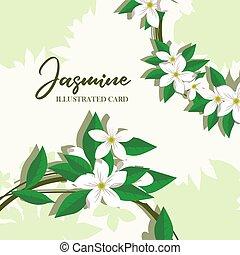 Jasmine flowers vector illustration