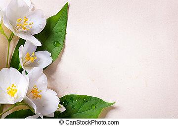 jasmine, forår blomstrer, på, gamle, avis, baggrund