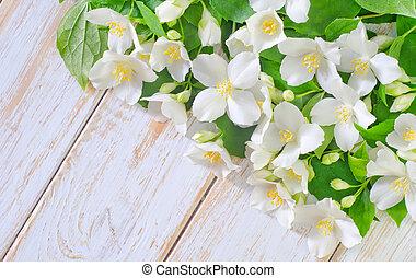 jasmine, forår blomstrer, ramme, på hvide, baggrund