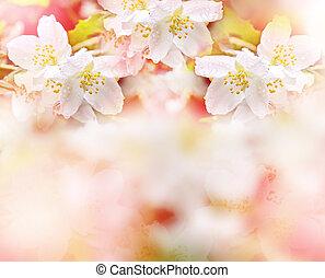 jasmine., fruehjahr, delikat, zweig, weisse blumen