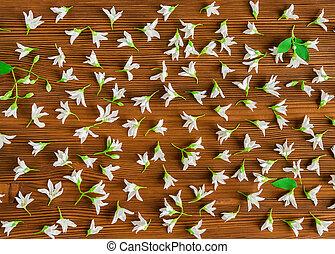 jasmine spring flowers background