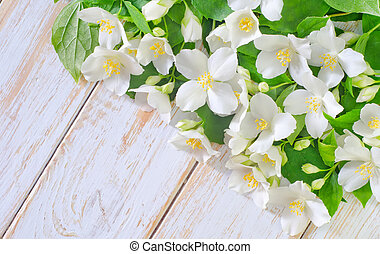 jasmine spring flowers frame on white background