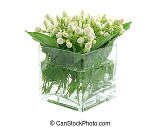 Bouquet of jasmines in vase, isolated white background