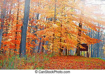 jasny, autumn drzewa