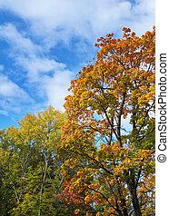 jasny, jesień, drzewo, w parku