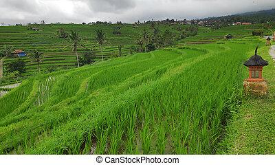 Jatiluwih rice terrace with sunny day in Ubud, Bali