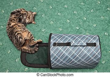 jaula, gato, transporte, luego