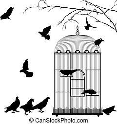 jaula, y, aves